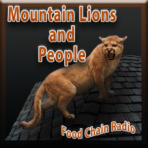Michael Olson Food Chain Radio – Can people and mountain lions just get along?
